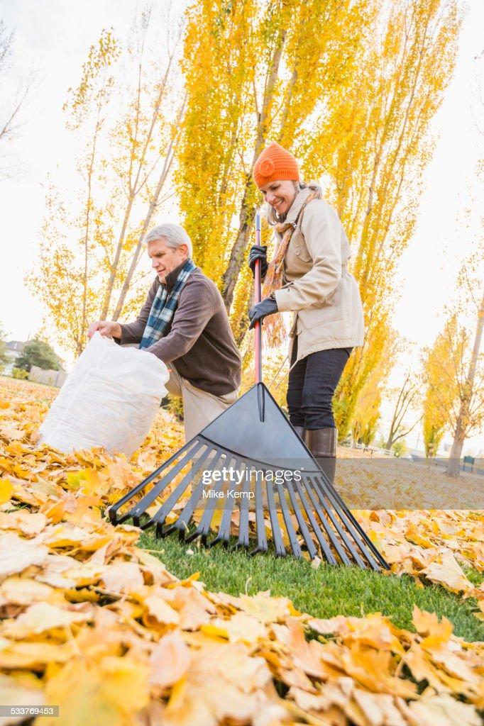 Older Caucasian couple raking autumn leaves : Foto stock