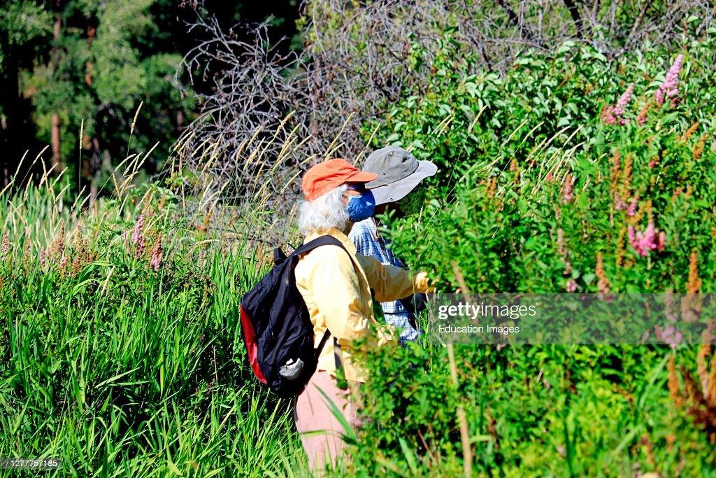 Older couple hiking while wearing masks : News Photo