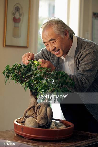 Older man pruning his bonsai tree