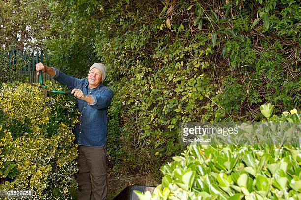 Older man trimming hedges in garden