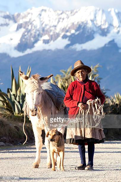 older woman walking in the mountains near moray. cusco. peru. - hugh sitton stock pictures, royalty-free photos & images