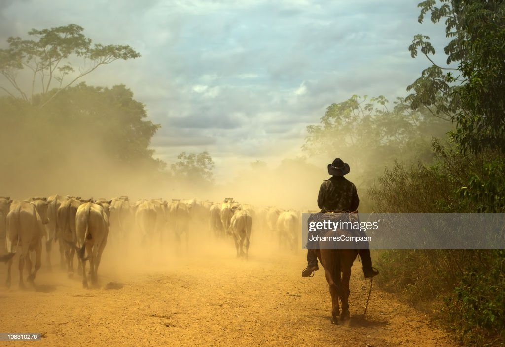 Oldfashioned cowboy at cattle drive. Pantanal wetlands, Brazil : Stock Photo
