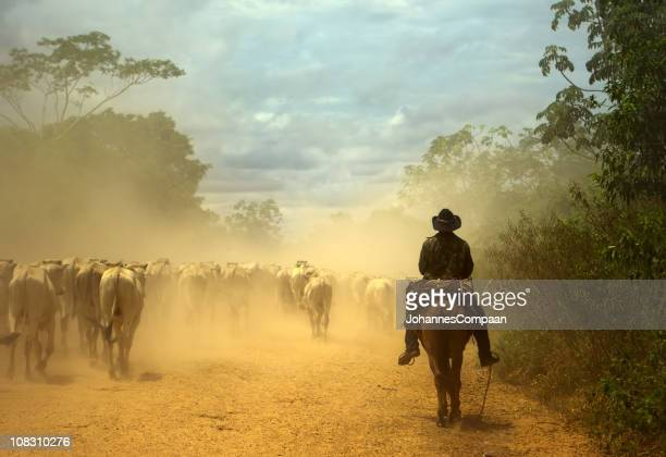 oldfashioned cowboy at cattle drive. pantanal wetlands, brazil - south america stock pictures, royalty-free photos & images