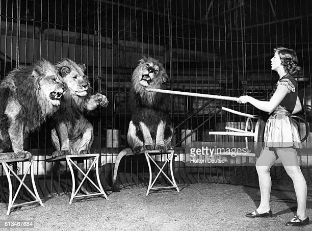 Olga insturcts circus lions with the aid of a stool and a stick
