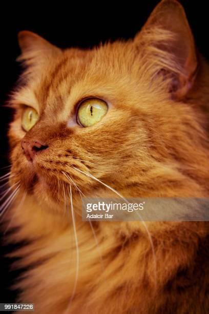 olhar de um gato - um animal stockfoto's en -beelden