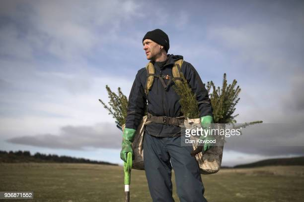 Oli a worker from 'The Forestry Workers' CoOperative' carries Sitka Spruce to start planting on March 22 2018 in Doddington England The Doddington...