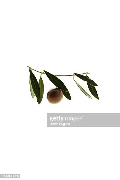olive and olive leaf - green olive stock photos and pictures