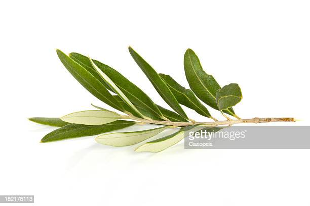 olive branch - olive stock pictures, royalty-free photos & images
