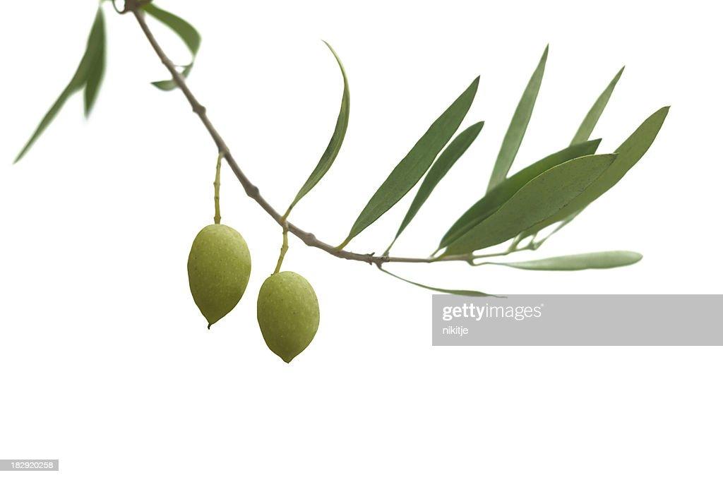 Olive branch : Stock Photo
