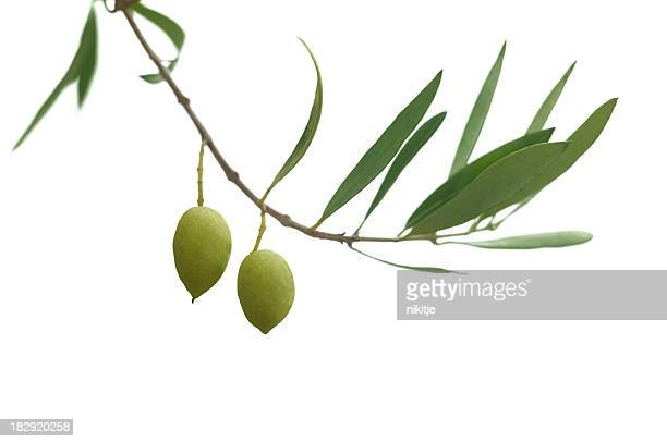 olive branch - green olive stock photos and pictures
