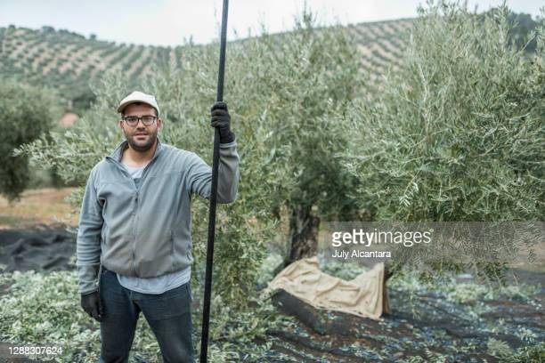 olive farmer worker poses with pickaxe looking at camera. there is a olive tree with fallen black olives in background - mediterranean culture stock pictures, royalty-free photos & images