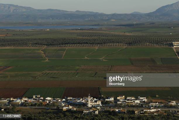 Olive groves stand in the fields beyond the village of Navahermosa Spain on Wednesday March 13 2019 The relationship between Washington and Madrid is...