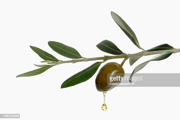 olive oil dripping from olive - green olive stock photos and pictures
