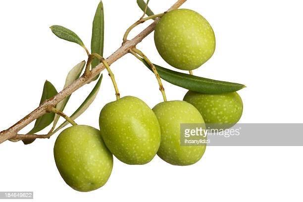 olive - green olive stock photos and pictures