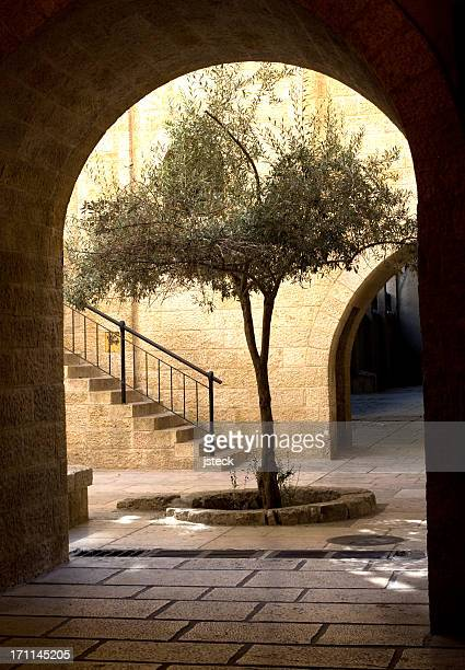 Olive Tree in the Old City of Jerusalem
