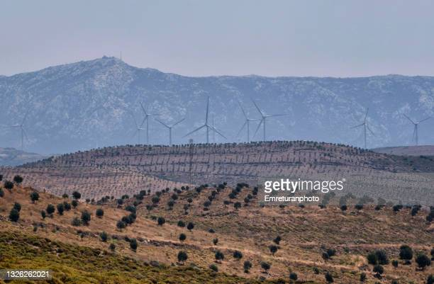 olive tree plantations and windmills in karaburun. - emreturanphoto stock pictures, royalty-free photos & images
