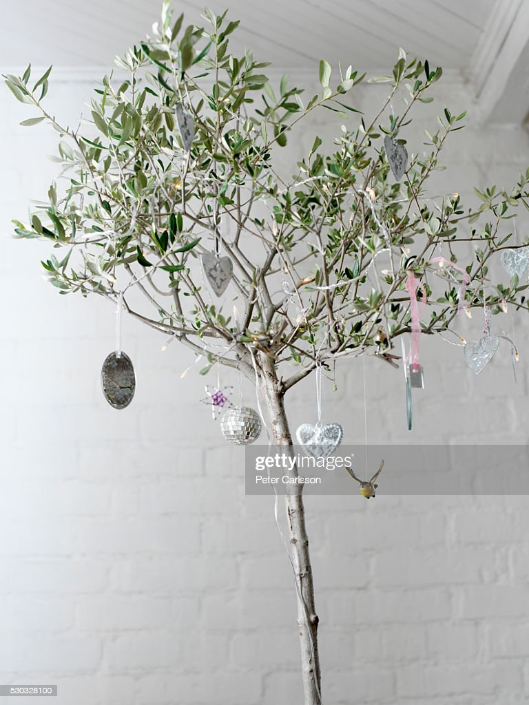 Olive Tree With Christmas Decorations High Res Stock Photo Getty Images