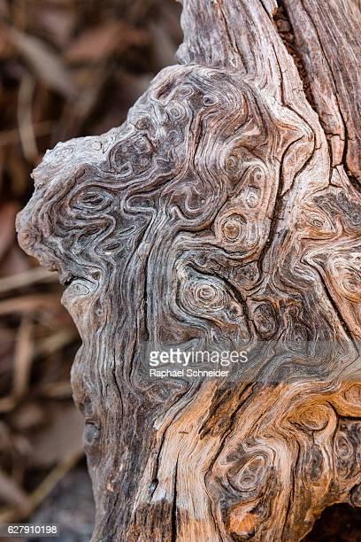 Olive tree wood closeup