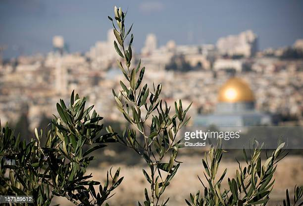 olive trees in jerusalem - mount of olives stock photos and pictures