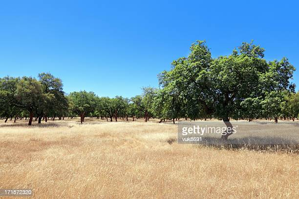 olive trees - green olive stock photos and pictures