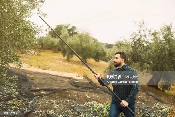 Olive worker