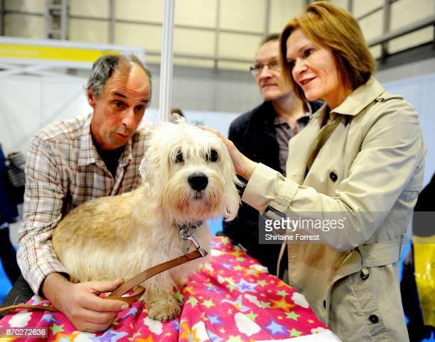 Oliver, a Dandie Dinmont Terrier attends the National Pet Show at The NEC Arena on November 4, 2017 in Birmingham, England.