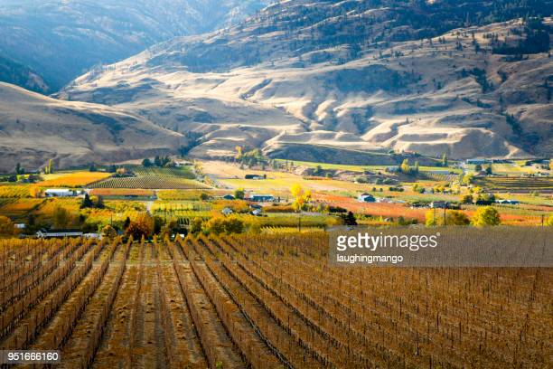 oliver okanagan valley british columbia - british columbia stock pictures, royalty-free photos & images