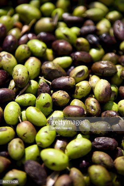 olives from the west bank, palestine - green olive ストックフォトと画像