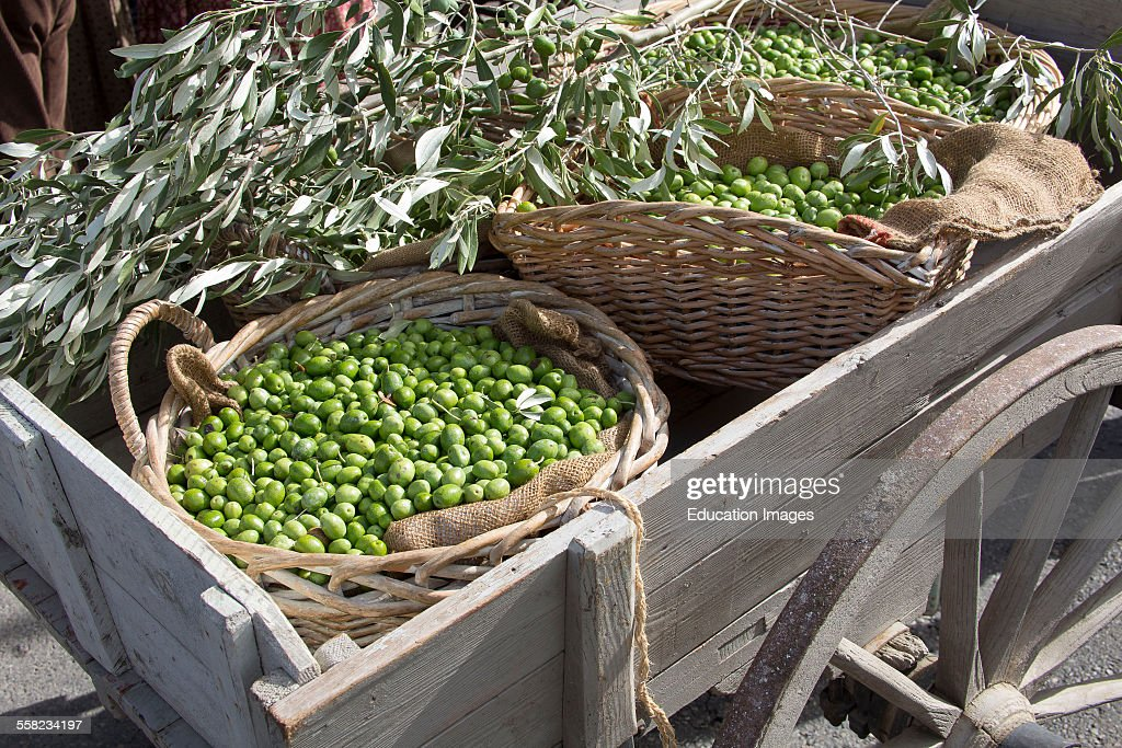 Olives In A Wood Wheelbarrow, Mouries, France : News Photo
