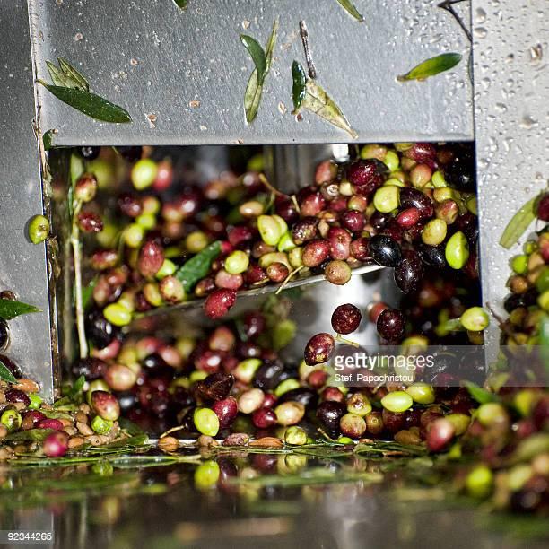 Olives in oil-press