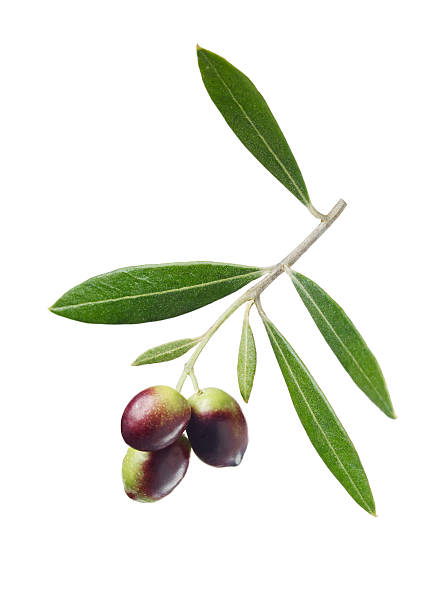 Olives On Branch Wall Art