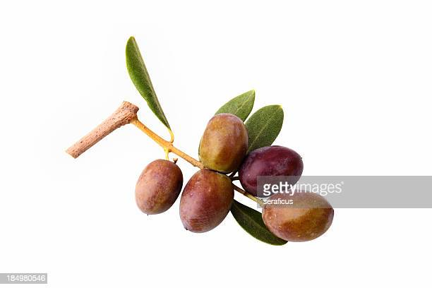 olives on white - twijg stockfoto's en -beelden