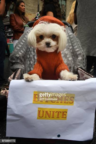 Olivia the dog joins women who are survivors of sexual harassment sexual assault and sexual abuse at a #MeToo march in Hollywood California on...
