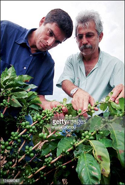 Olivier Anquier baker pastrycook and TV host In Brazil On December 11 2000 Olivier Anquier leaning over coffee plants in a coffee plantation He set...