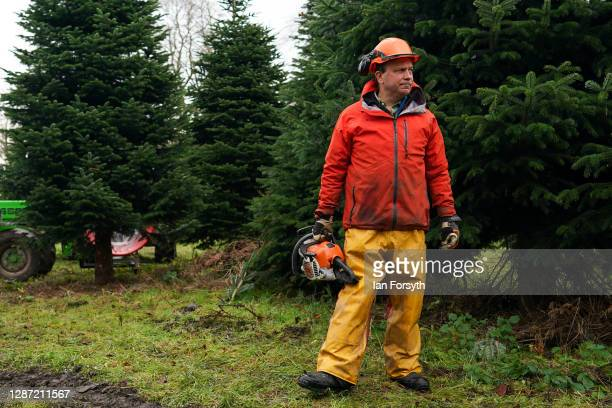 Olly Combe owner of York Christmas Trees prepares to fell a 20 foot Nordmann Fir tree to be sent to stand outside 10 Downing Street during the...