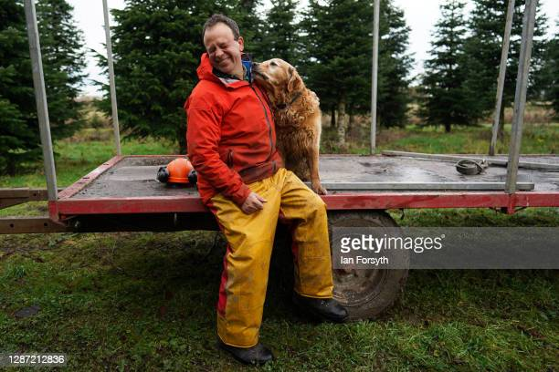 Olly Combe owner of York Christmas Trees sits with his dog Bryn as he prepares to fell a 20 foot Nordmann Fir tree to be sent to stand outside 10...