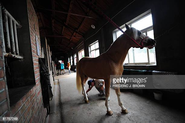 """Oly-2008-CHN-equestrian"""" by Fancois Bougon Meerles the pony, a recent arrival from Europe, stands patiently for a trim around her hooves by a stable..."""