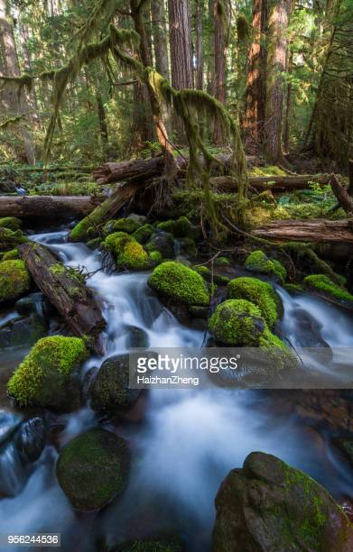Olympic National Park, United States