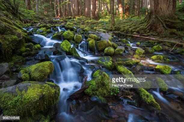 olympic national park, united states - foresta temperata foto e immagini stock