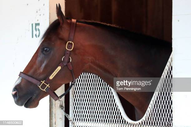 Omaha Beach as seen in the barn after Omaha Beach was scratched the 145th running of the Kentucky Derby at Churchill Downs due to an entrapped...