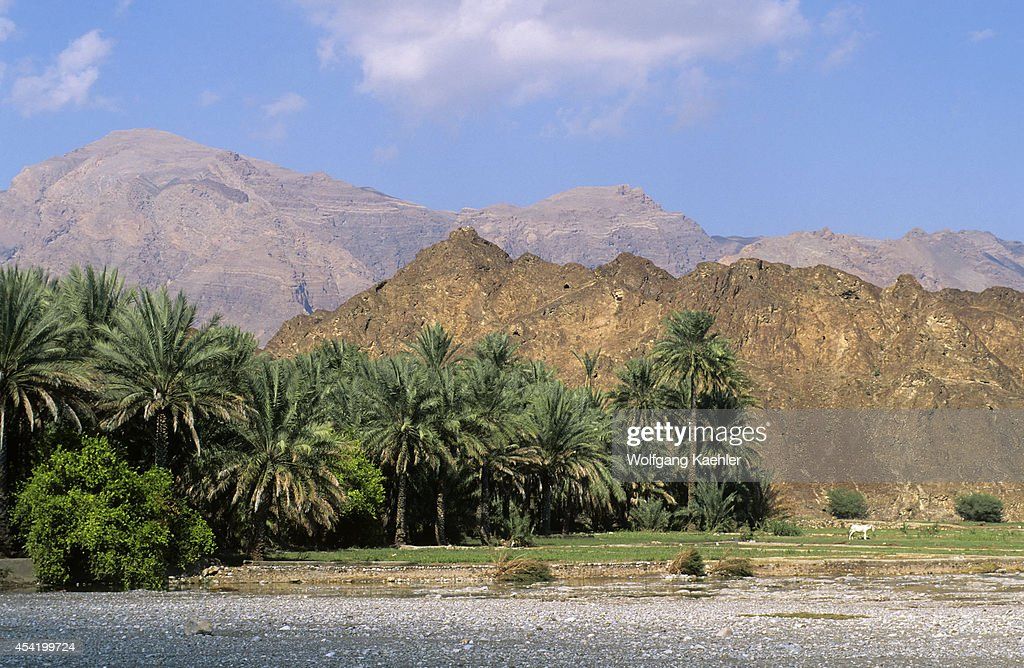 Oman, Near Muscat, Landscape With Palm Trees.