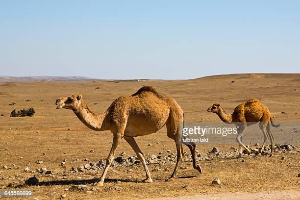OMN Oman Sultanat Oman Salalah Dschebel Samhan Jebel Samhan Dhofar Arabien Araber arabisch Arabische Halbinsel Naher Osten Mittlerer Osten Monarchie...