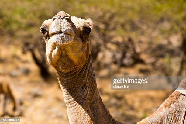 OMN Oman Sultanat Oman Salalah Wadi Darbat Dhofar Arabien Araber arabisch Arabische Halbinsel Naher Osten Mittlerer Osten Monarchie Ibaditen Islam...