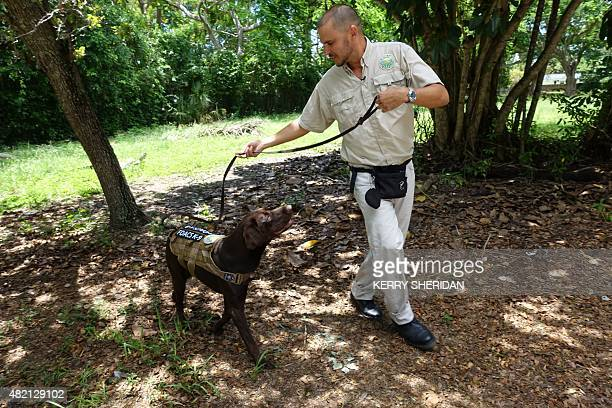 Omar Garcia a dog handler with the Florida Department of Agriculture trains a chocolate lab named Sierra on July 17 2015 in MiamiFlorida to sniff out...