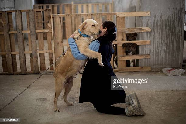 Omayma Abualkar a Palestinian girl from Jabaliya northern the Gaza Strip playing with her family dog this Palestinian family provide dog shelter for...