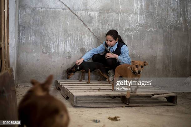 Omayma Abualkar a Palestinian girl from Jabaliya northern the Gaza Strip playing with her family dogs this Palestinian family provide dog shelter for...