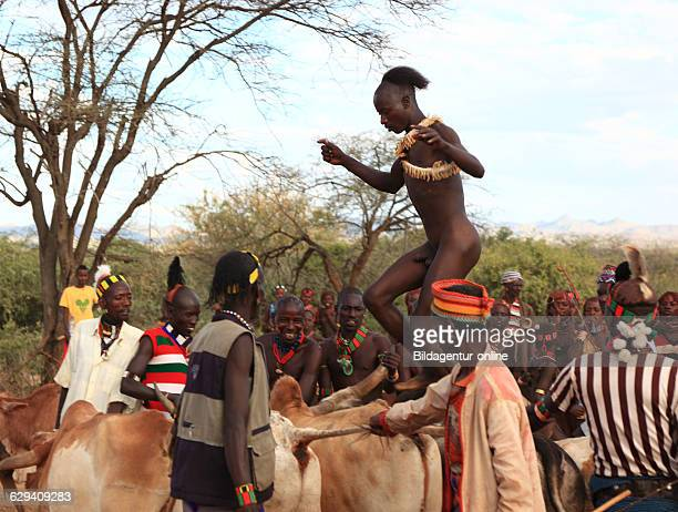 Omo region the tribe of the Hamar Hamer Hamma Hammer Amar or Amer initiation ritual ceremony an adolescent when jumping over the bulls bull jumping