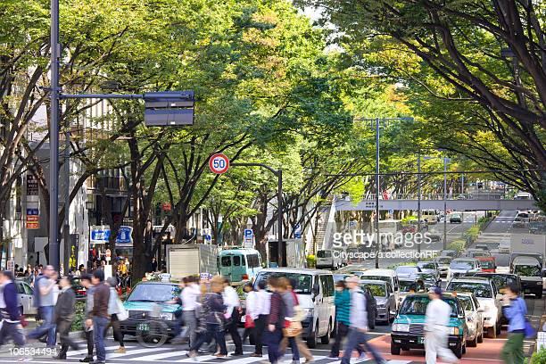 Omotesando, Shibuya Ward, Tokyo Prefecture, Honshu, Japan
