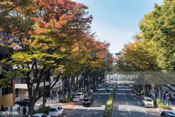 Omotesando street during Autumn in Tokyo