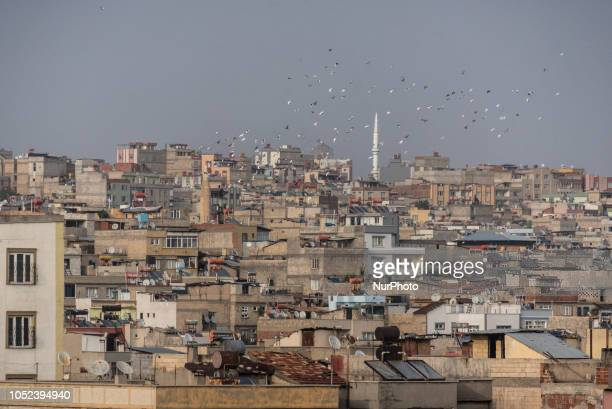 On 17 Oct 2018 a group of pigeons fly together over the skyline in Gaziantep a city in southern Turkey